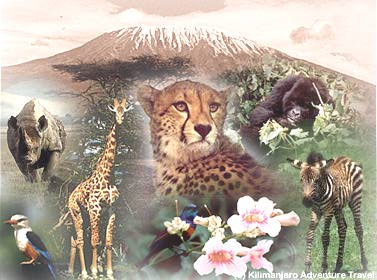 Discover the beauty of Africa with Kilimanjaro Web site